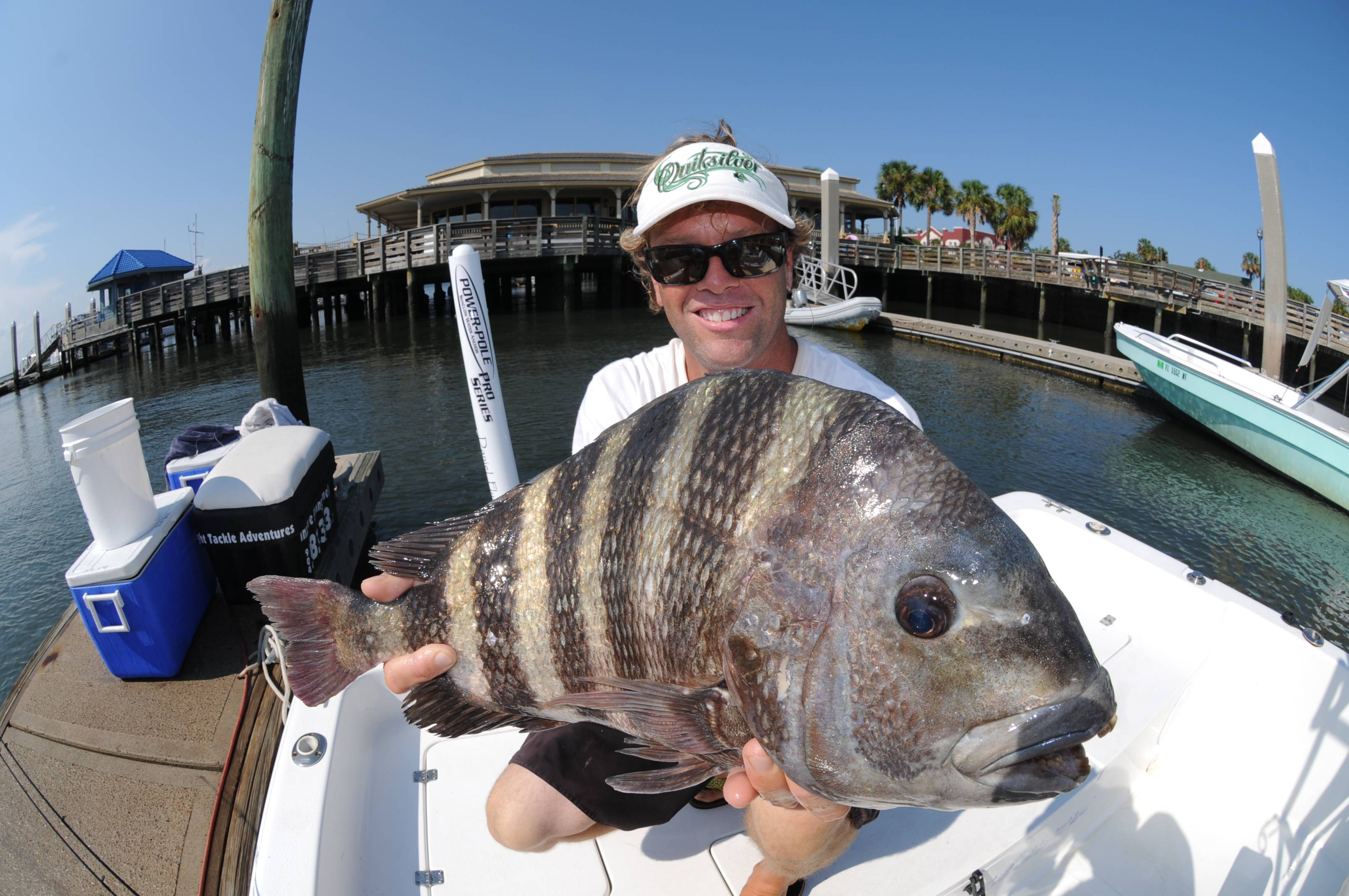 Big bite fish amelia angler outfitters for Sheepshead fish eating